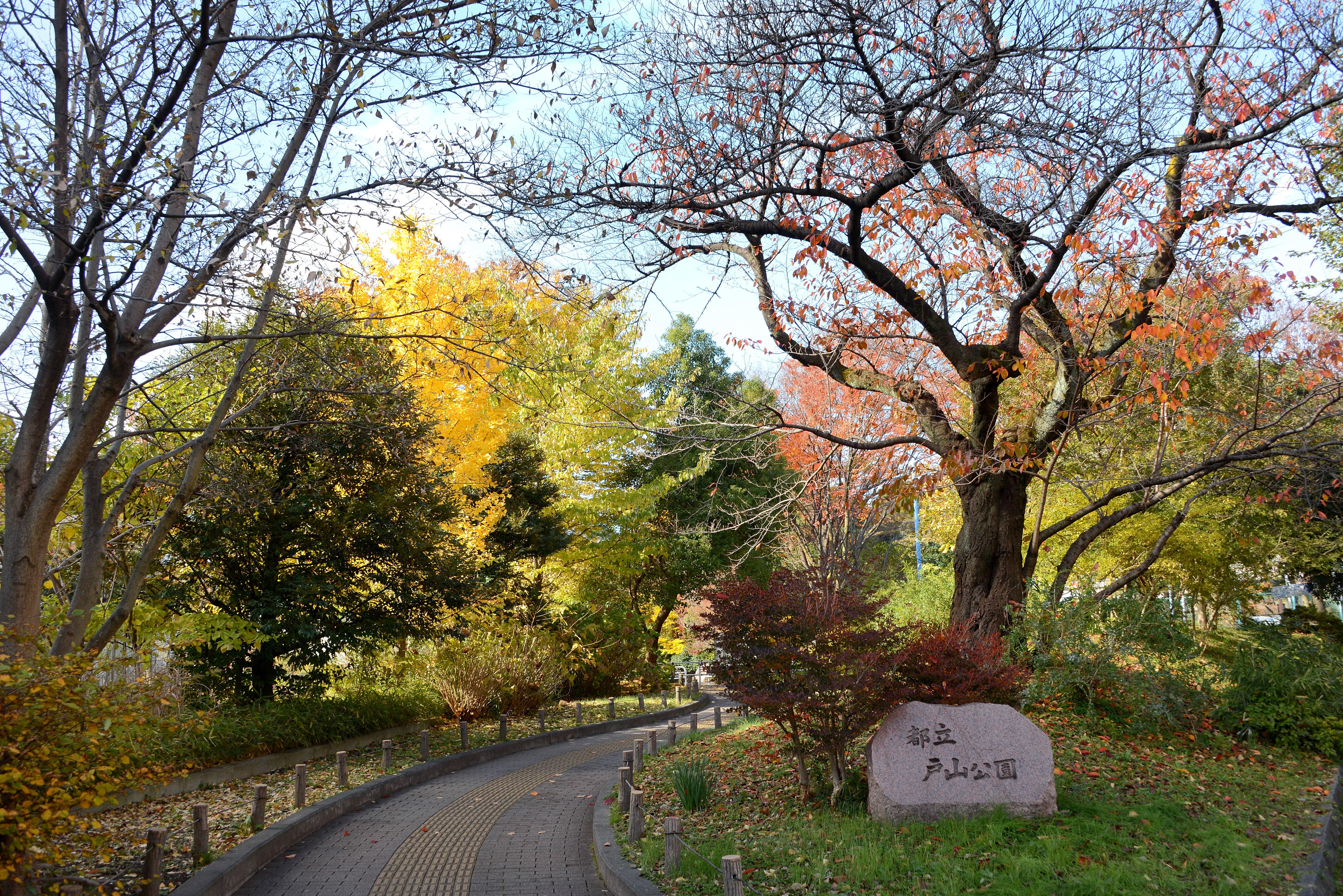 公園 戸山