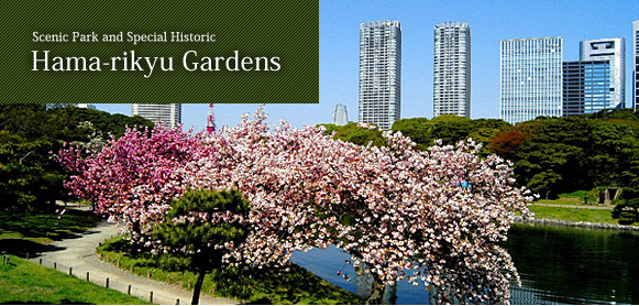 Scenic Park and Special Historic Hama-rikyu Gardens